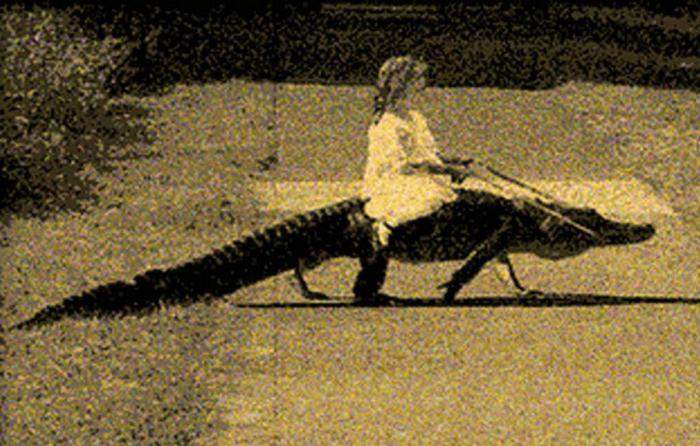 Катание на аллигаторе