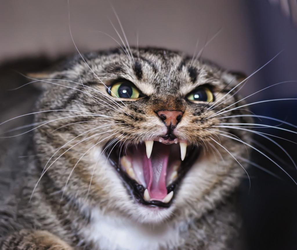 зачем делать прививку от бешенства кошке