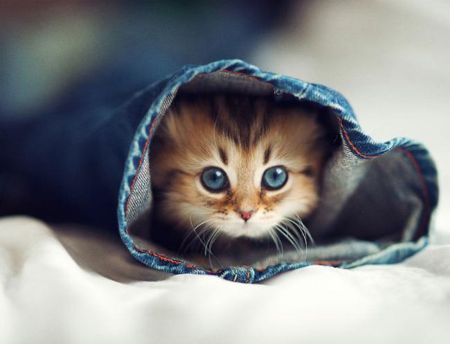 видеть во сне маленького котенка