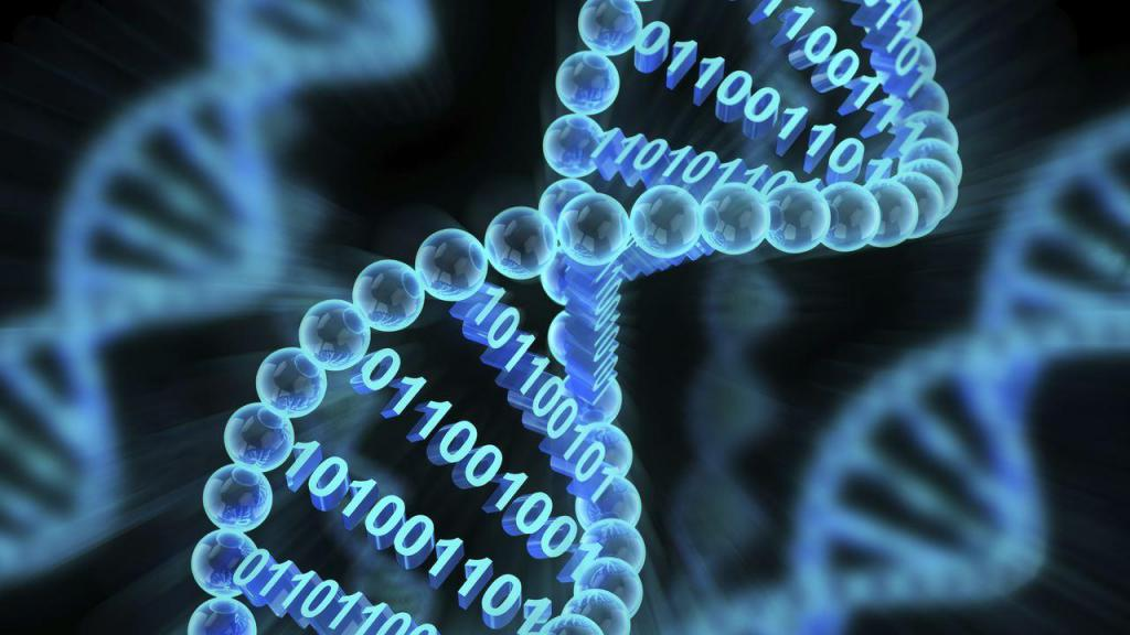 компьютерная ДНК
