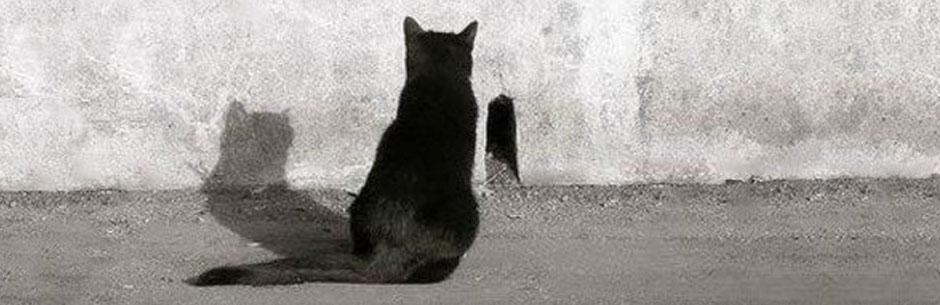 терпение кота