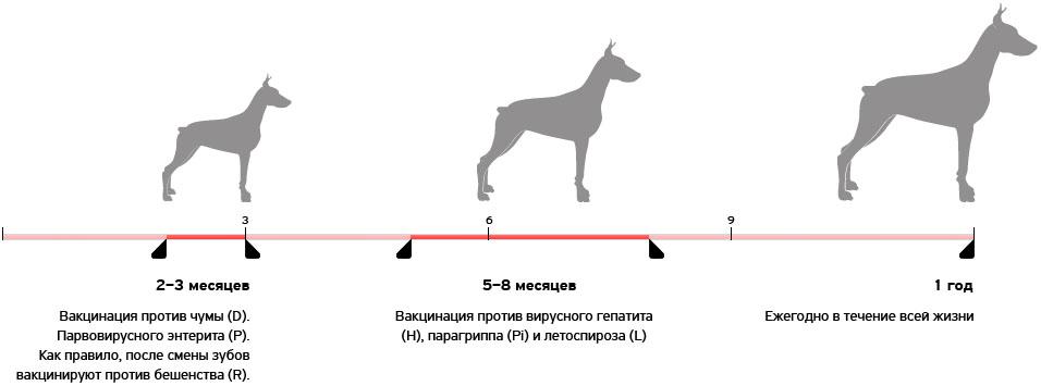 Графиу вакцинирования собак