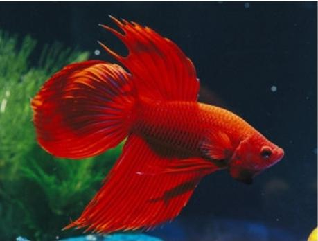 аквариумные рыбки совместимость видов