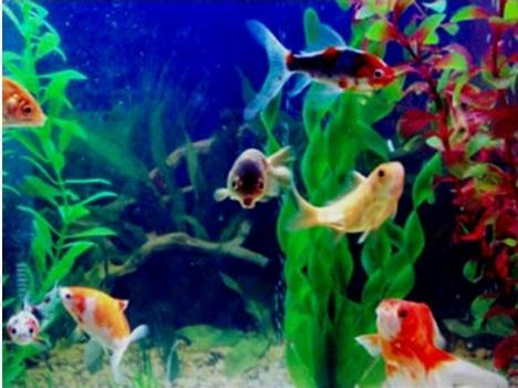 аквариумные рыбки совместимость