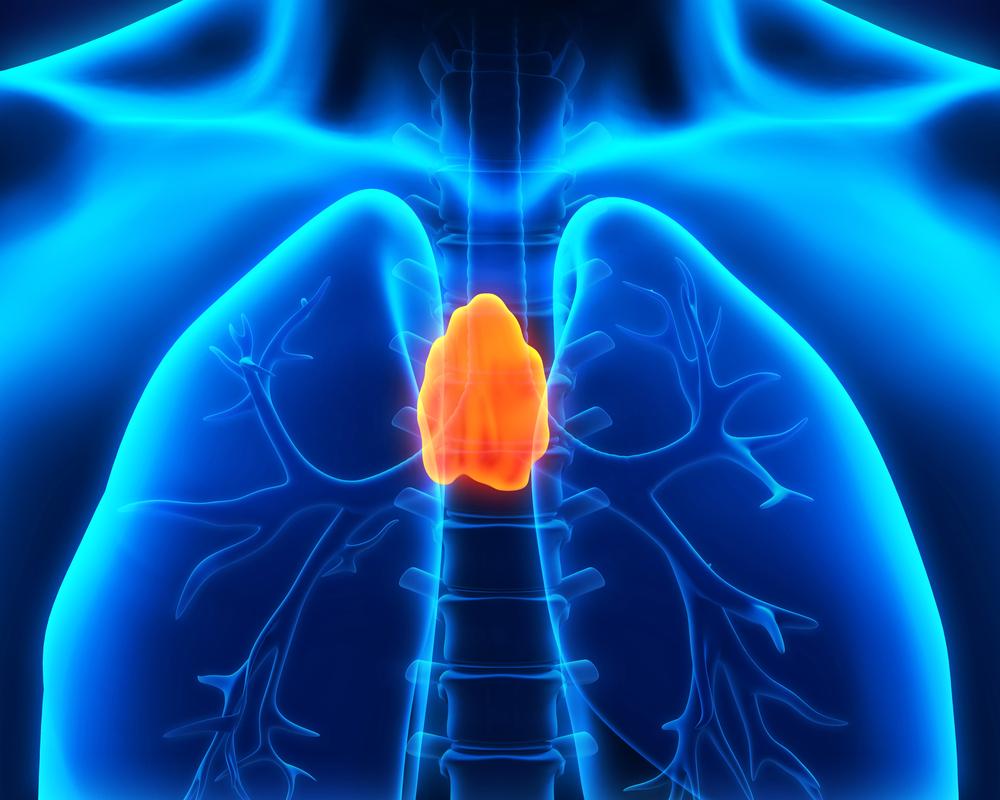 вилочковая железа человека