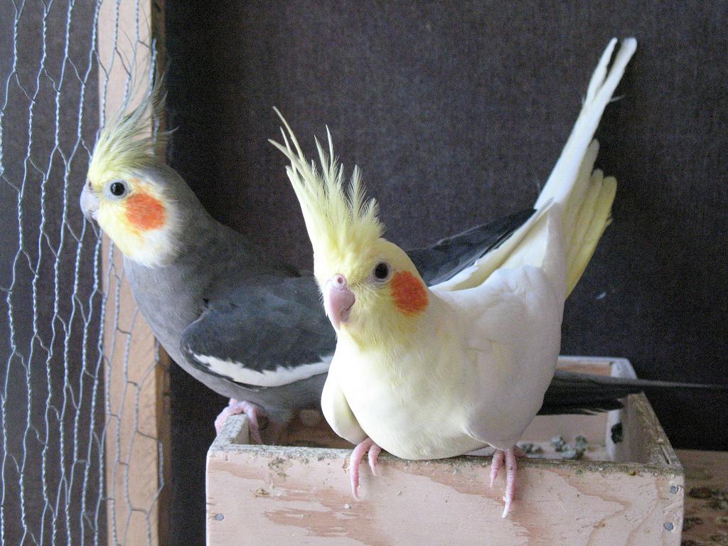 Оперение попугая