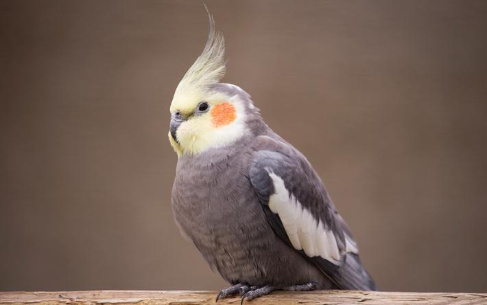 Состояние лап попугая