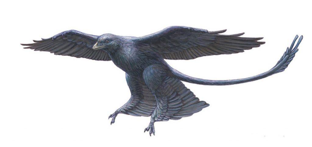 оперенные динозавры