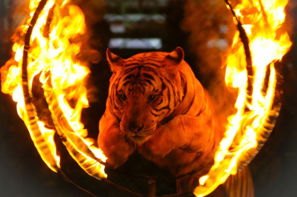 Запрет на содержание в цирке за границей