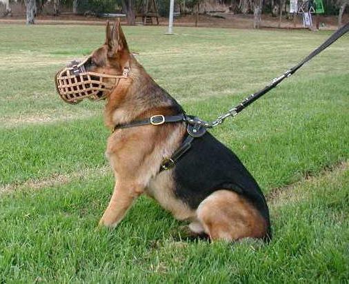 злые породы собак