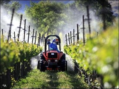 чем опрыскивать виноград от ос