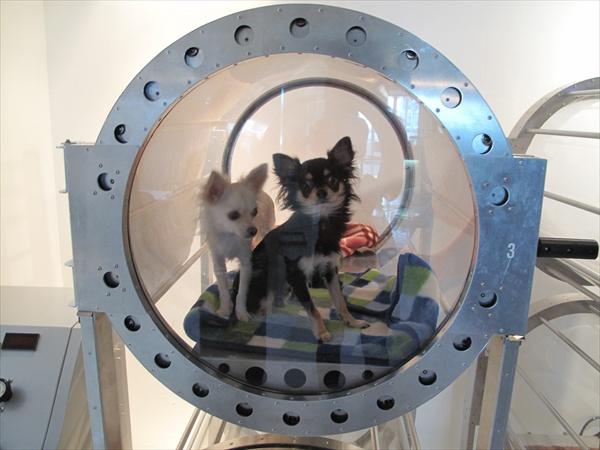 Две собаки на кислородотерапии