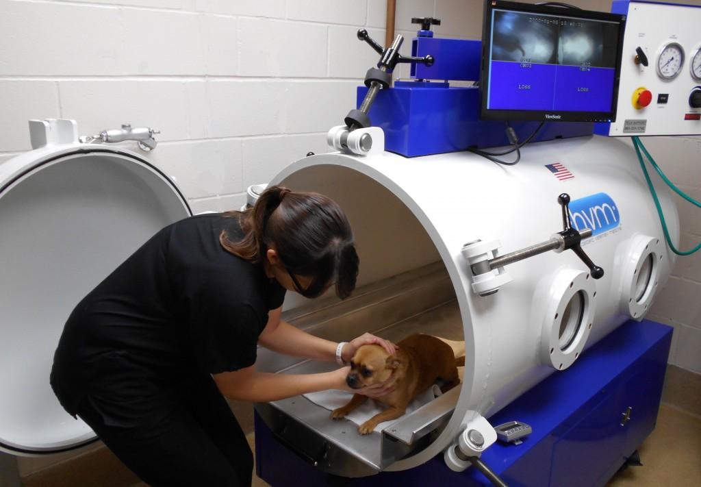 Кислородная камера в ветеринарной клинике