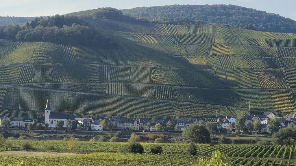 Вертикальные виноградники