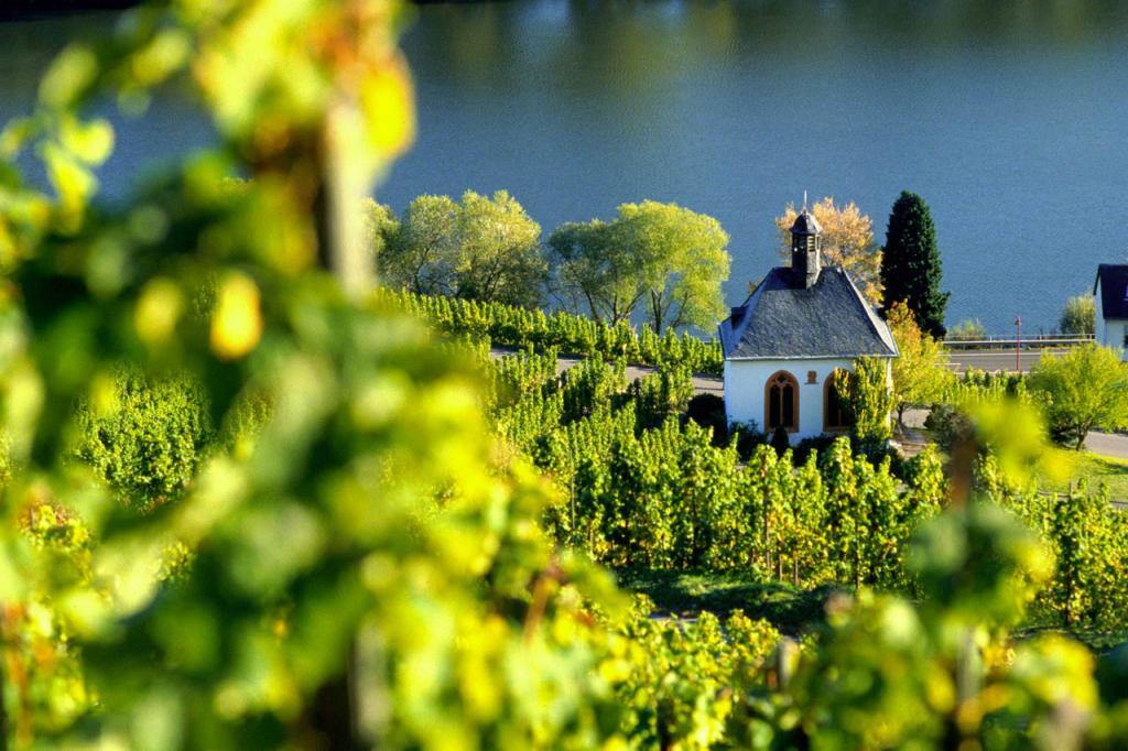 Мозельские виноградники