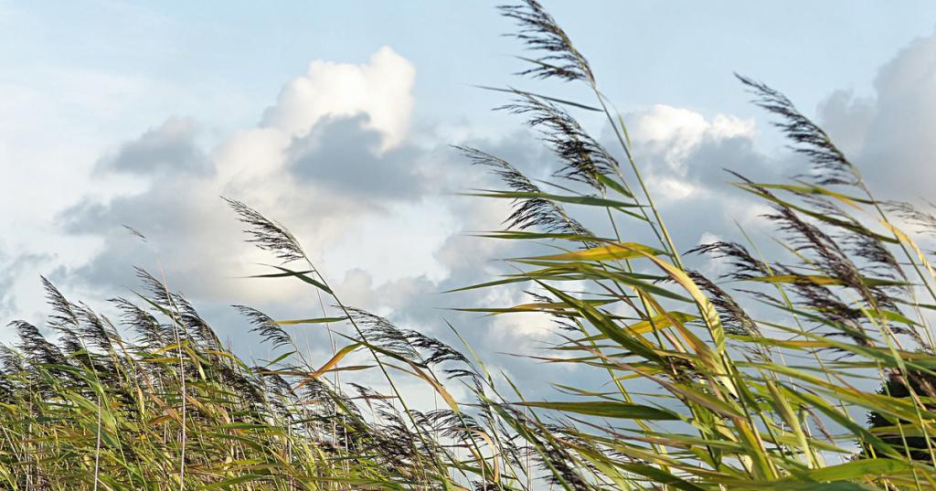 Свежий ветер в поле