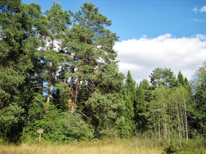 экологическая тропа киров заречный парк