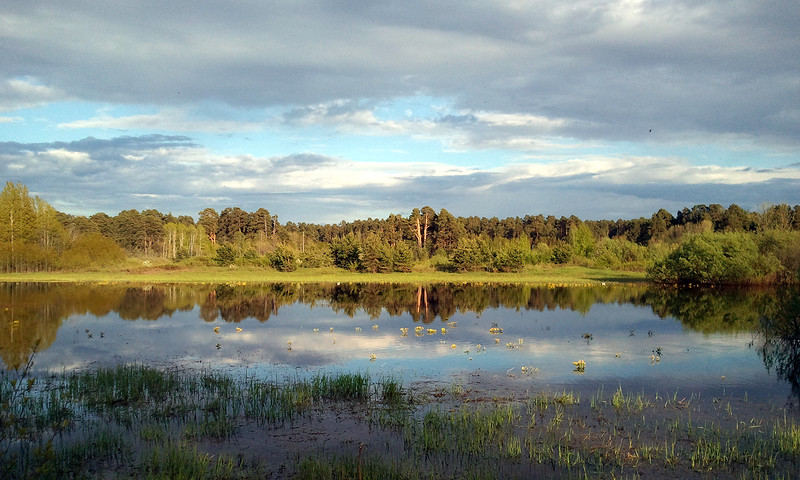 заречный парк киров - пруды