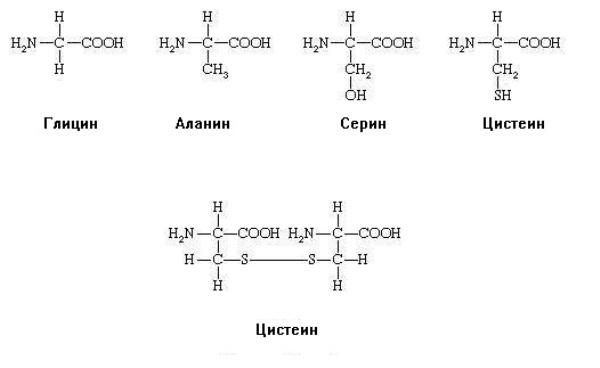 Структурные формулы некоторых аминокислот