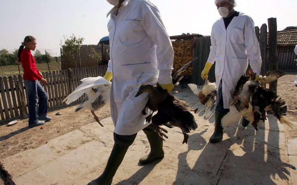 Эпидемии животных опасны для человека