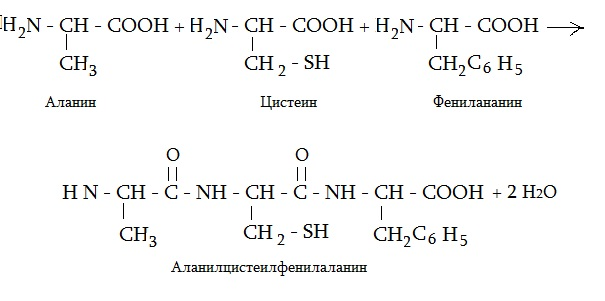 Трипептид Ала-цис-фен