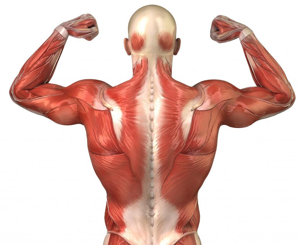 Гликоген в мышцах - что это?