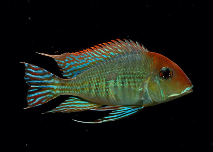Красивая рыбка!