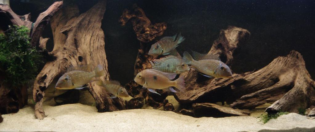 Подходящий аквариум