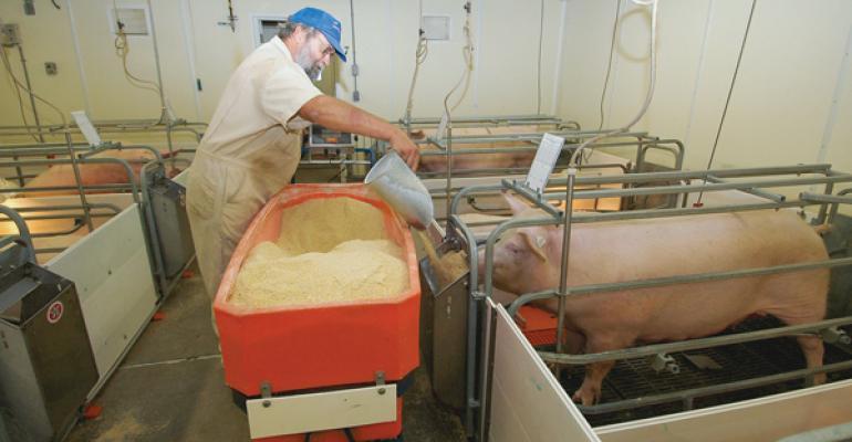 Уход за свиноматками