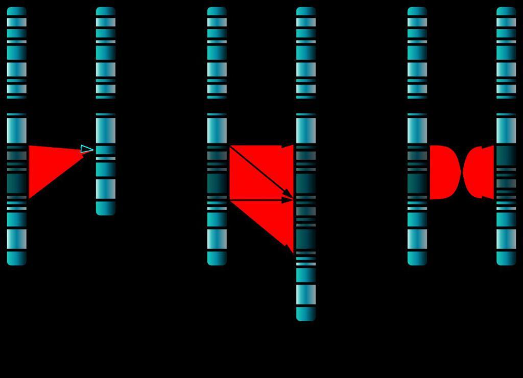 хромосомные аберрации