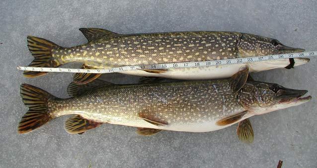 михайловская слобода платная рыбалка фото