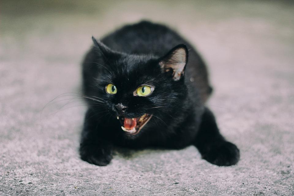 черный кот в доме приметы