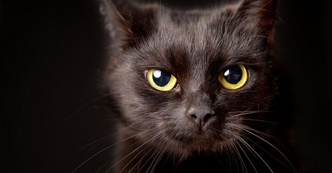 к чему приходит черный кот в дом