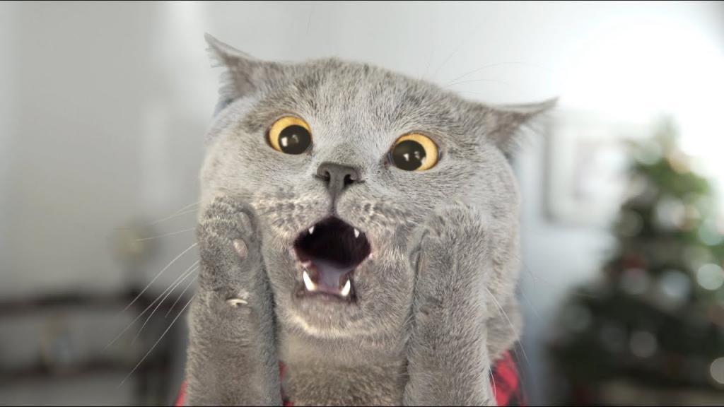 """Витамины для кошек """"Доктор Зоо"""": отзывы ветеринаров"""
