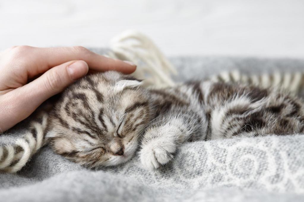 """Витамины для кошек """"Доктор Зоо"""": отзывы покупателей"""