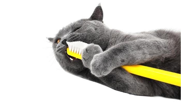 Меняются ли зубы у котят