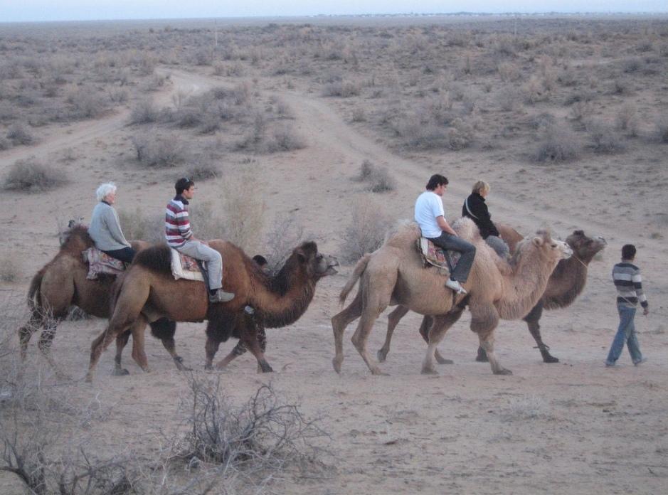 прогулка на верблюдах в районе Айдаркуля