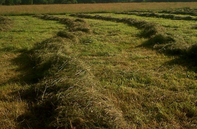 Ворошение сена