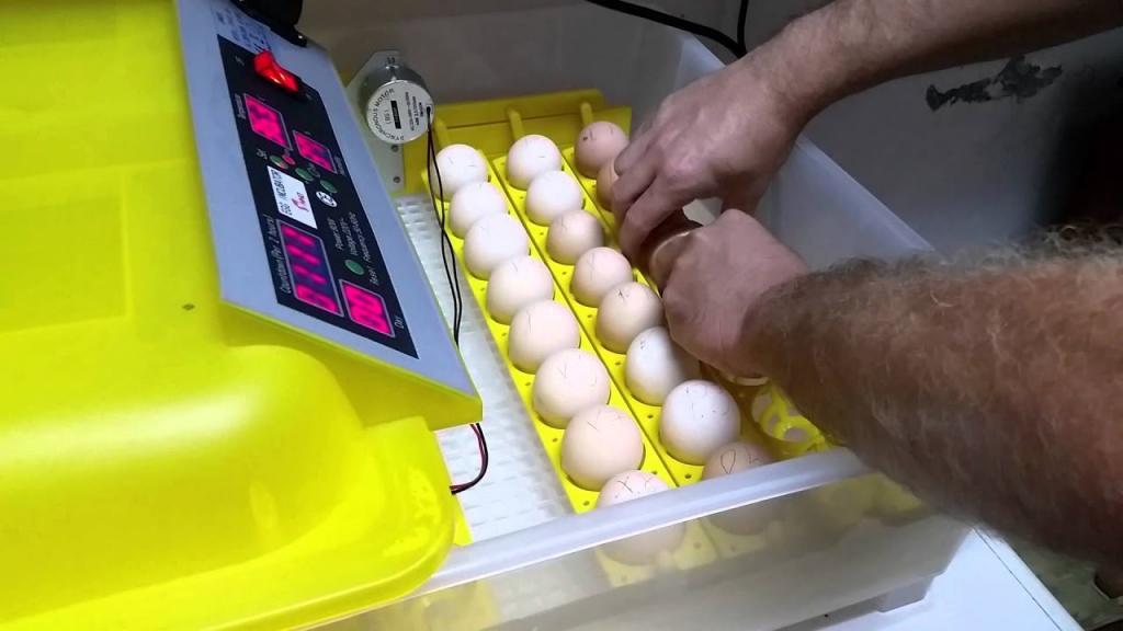 как выбрать инкубатор для яиц