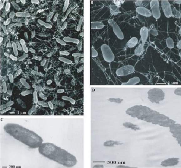 появление термофильных бактерий