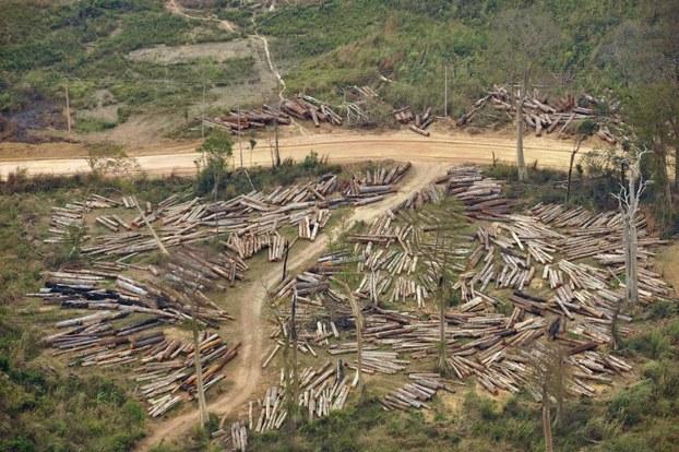 Отвод лесозаготовки