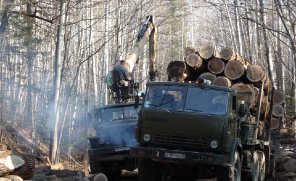 Транспортировка бревен на лесозаготовке