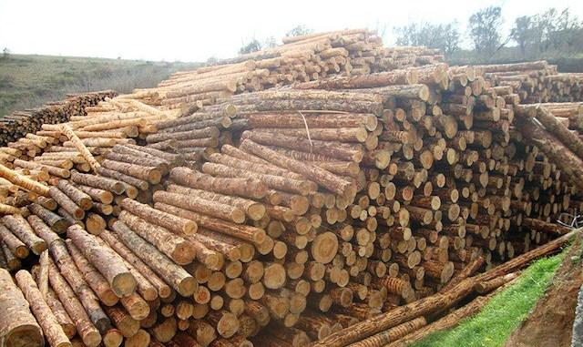 Складирование материалов лесозаготовки