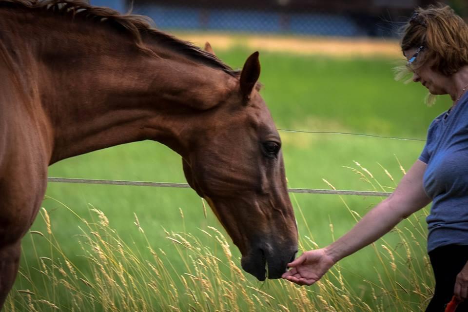 Приучение лошади