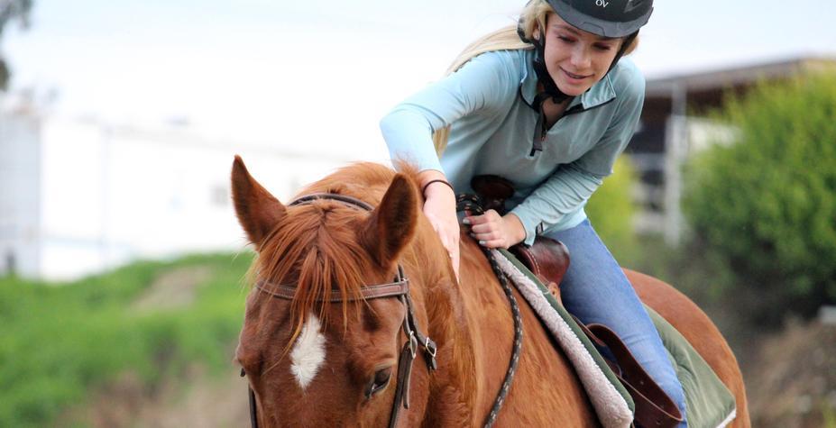 Как дрессировать лошадей
