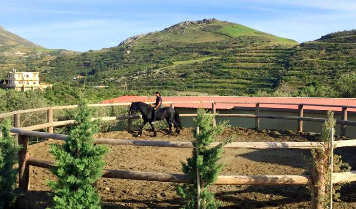 Приучение лошади к всаднику
