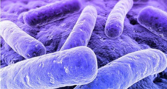 Синеватые бактерии.
