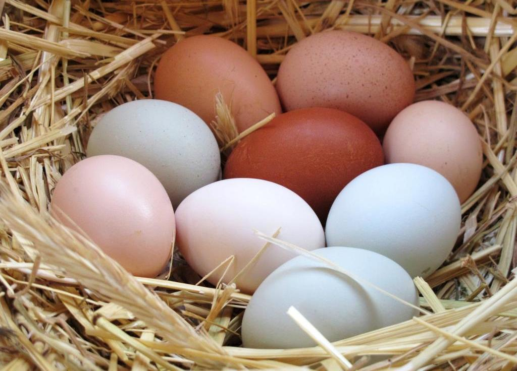Параметр яйценоскости