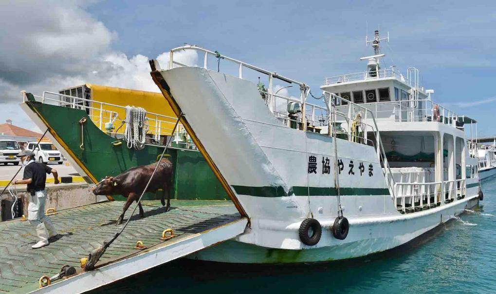 Перевоз скота на корабле