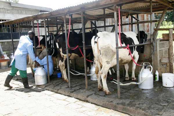 Дойка молока